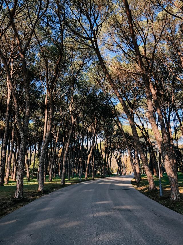 Парк в Монтекатини